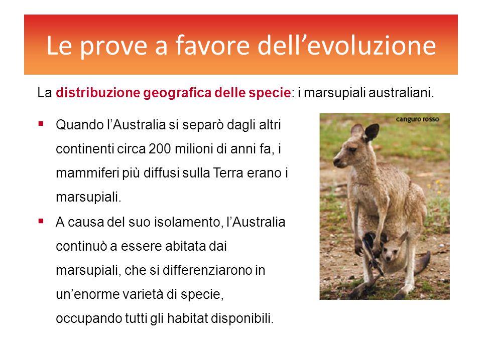 Le prove a favore dell'evoluzione  Quando l'Australia si separò dagli altri continenti circa 200 milioni di anni fa, i mammiferi più diffusi sulla Te