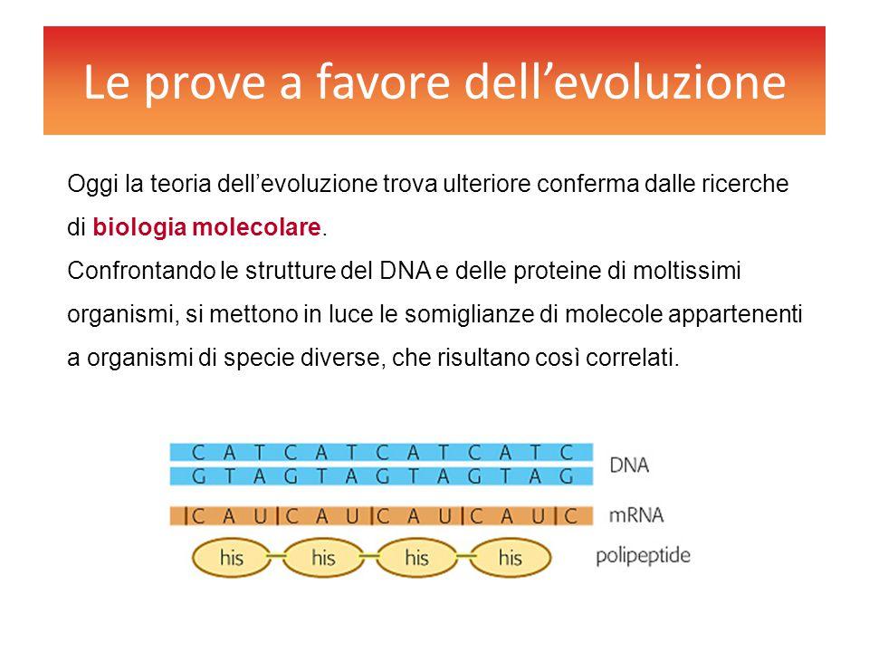Le prove a favore dell'evoluzione Oggi la teoria dell'evoluzione trova ulteriore conferma dalle ricerche di biologia molecolare. Confrontando le strut