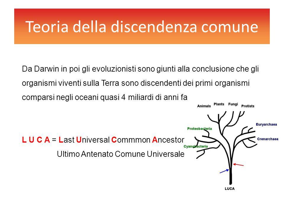 Teoria della discendenza comune Da Darwin in poi gli evoluzionisti sono giunti alla conclusione che gli organismi viventi sulla Terra sono discendenti