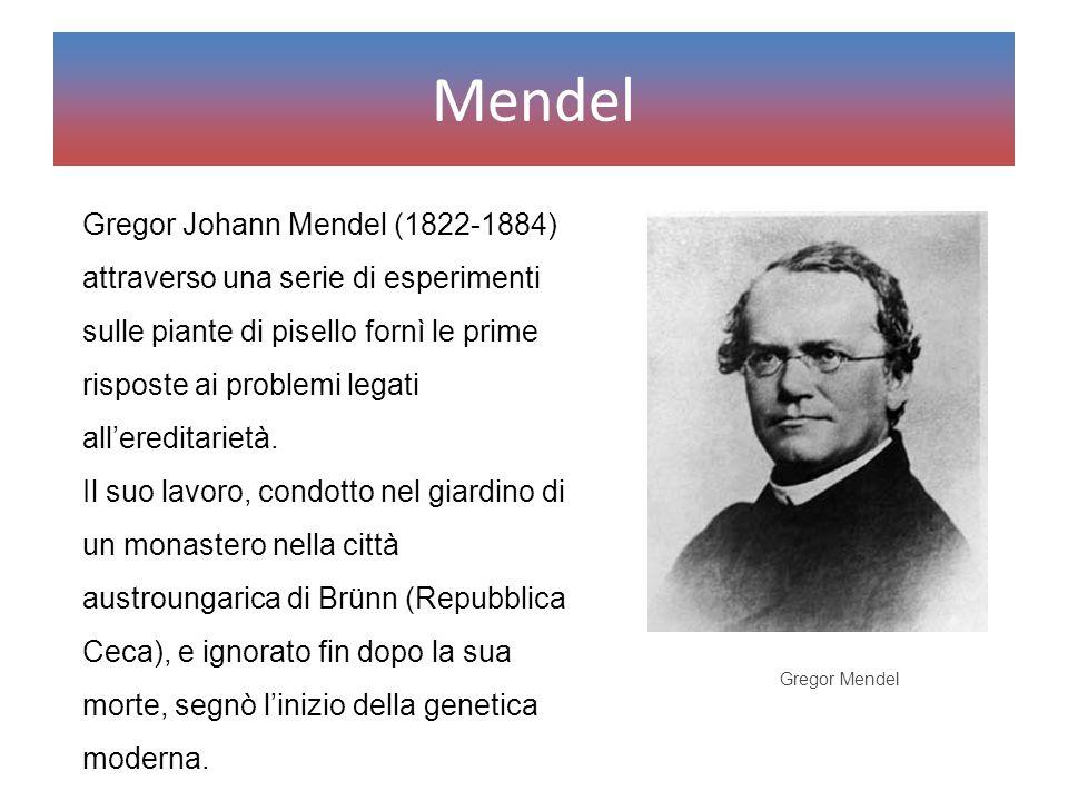 Mendel Gregor Johann Mendel (1822-1884) attraverso una serie di esperimenti sulle piante di pisello fornì le prime risposte ai problemi legati all'ere