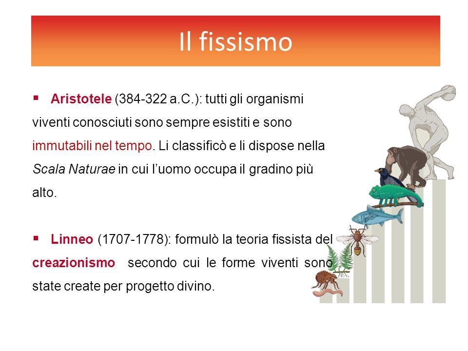Il fissismo  Aristotele (384-322 a.C.): tutti gli organismi viventi conosciuti sono sempre esistiti e sono immutabili nel tempo. Li classificò e li d