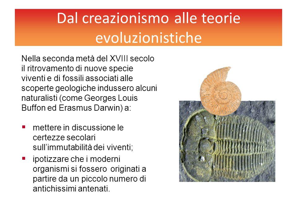 Dal creazionismo alle teorie evoluzionistiche Nella seconda metà del XVIII secolo il ritrovamento di nuove specie viventi e di fossili associati alle