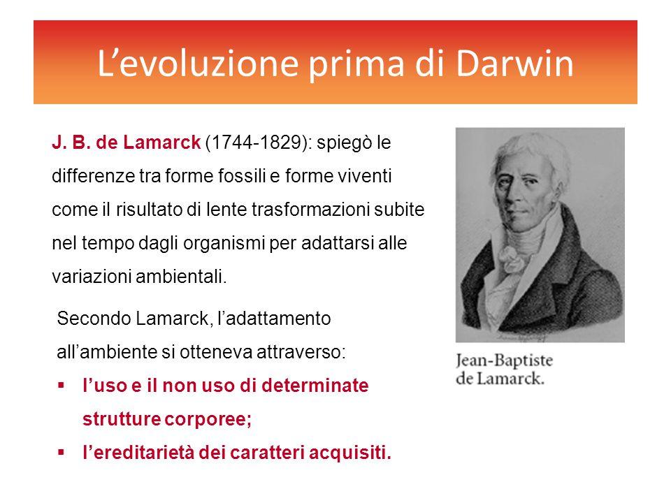 L'evoluzione prima di Darwin J. B. de Lamarck (1744-1829): spiegò le differenze tra forme fossili e forme viventi come il risultato di lente trasforma
