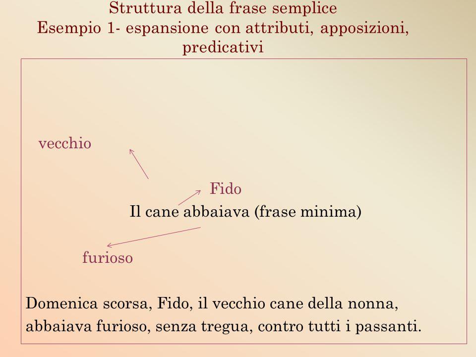 Struttura della frase semplice Esempio 1- espansione con attributi, apposizioni, predicativi vecchio Fido Il cane abbaiava (frase minima) furioso Dome