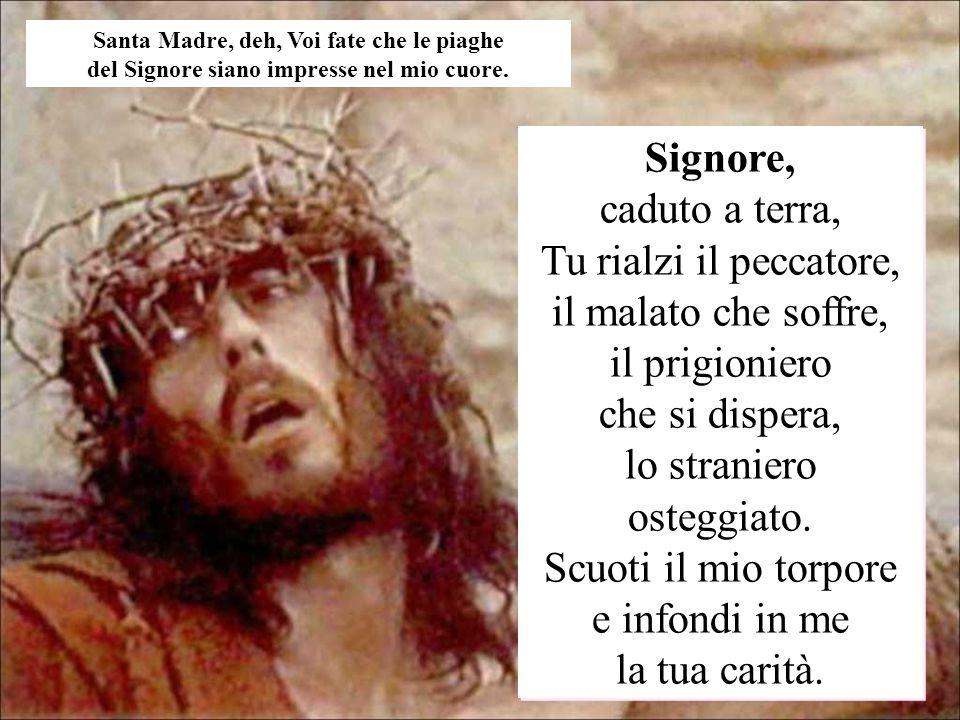 Signore, caduto a terra, Tu rialzi il peccatore, il malato che soffre, il prigioniero che si dispera, lo straniero osteggiato. Scuoti il mio torpore e
