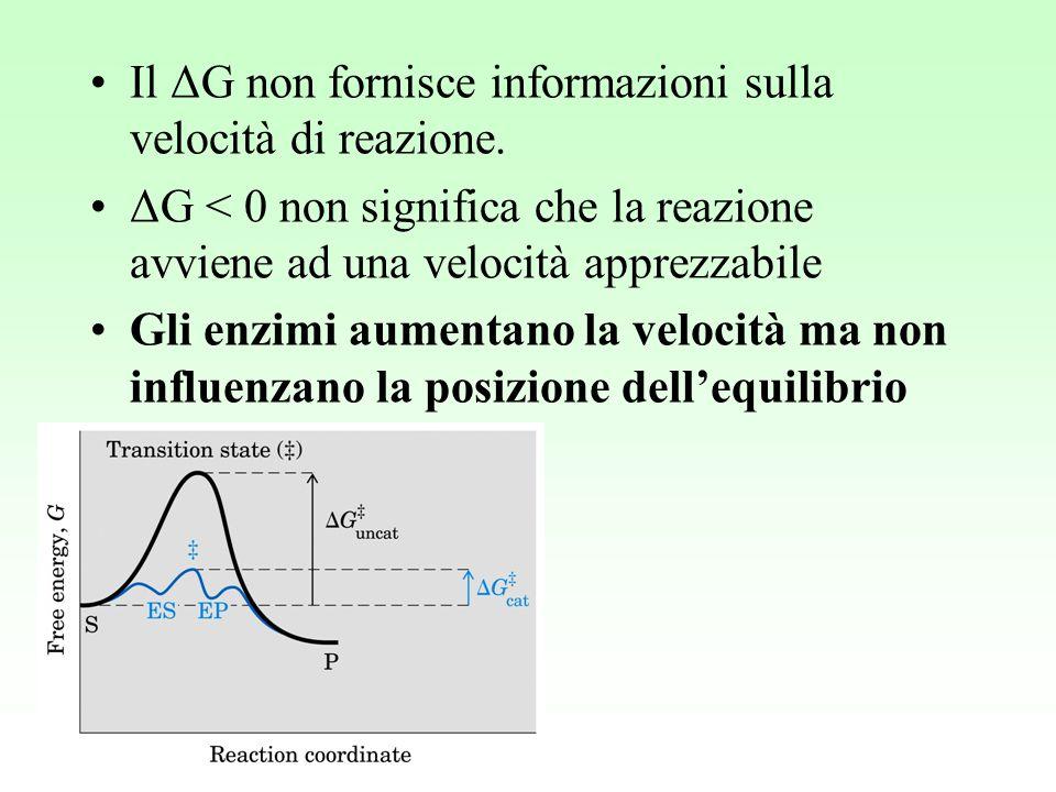 Il ΔG non fornisce informazioni sulla velocità di reazione. ΔG < 0 non significa che la reazione avviene ad una velocità apprezzabile Gli enzimi aumen