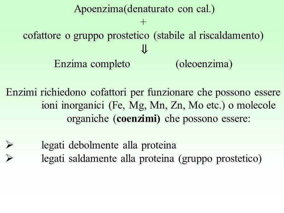 Apoenzima(denaturato con cal.) + cofattore o gruppo prostetico (stabile al riscaldamento) ⇓ Enzima completo (oleoenzima) Enzimi richiedono cofattori p