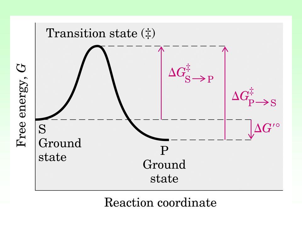Influenza della temperatura Lo studio attività/temperatura permette di calcolare dall'equazione di Arrhenius K=A e -Ea/RT dalla cui linearizzazione si possono calcolare: Ea (molto + basso nelle reazioni enzimaticamente catalizzate) Q10= coefficiente termico ovvero fattore di cui aumenta la velocità quando T aumenta di 10°C.