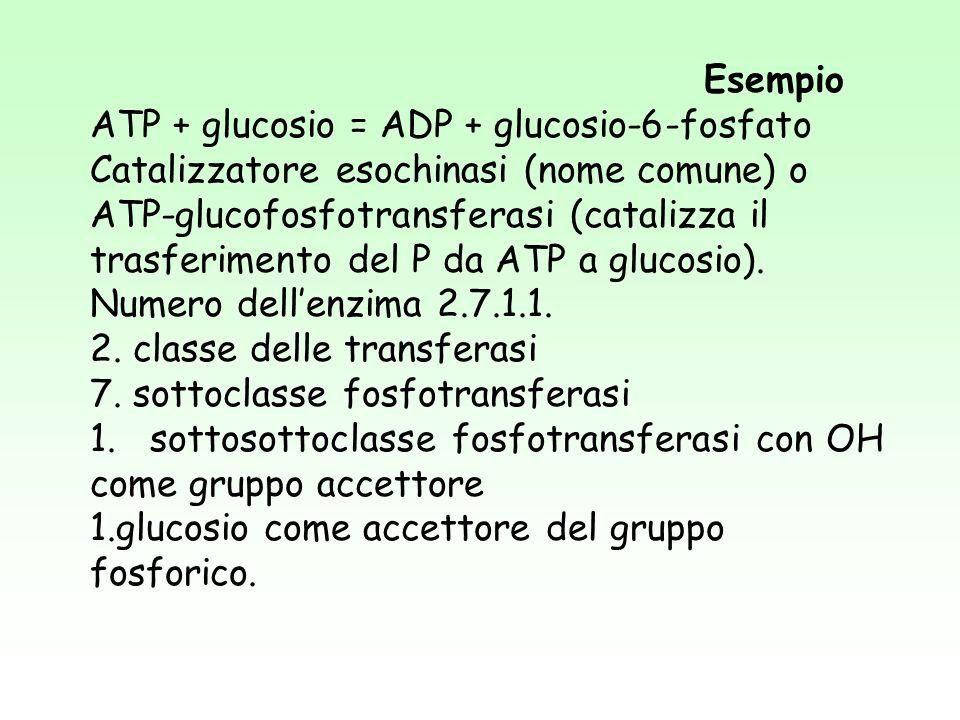 Esempio ATP + glucosio = ADP + glucosio-6-fosfato Catalizzatore esochinasi (nome comune) o ATP-glucofosfotransferasi (catalizza il trasferimento del P