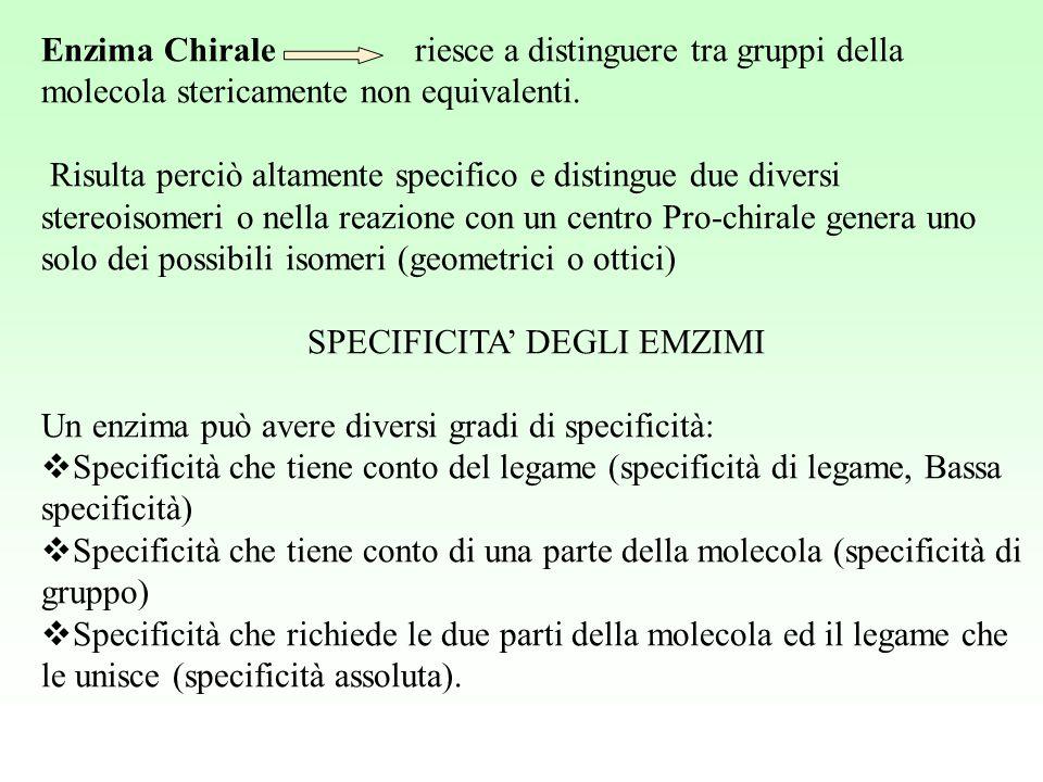 Enzima Chirale riesce a distinguere tra gruppi della molecola stericamente non equivalenti. Risulta perciò altamente specifico e distingue due diversi