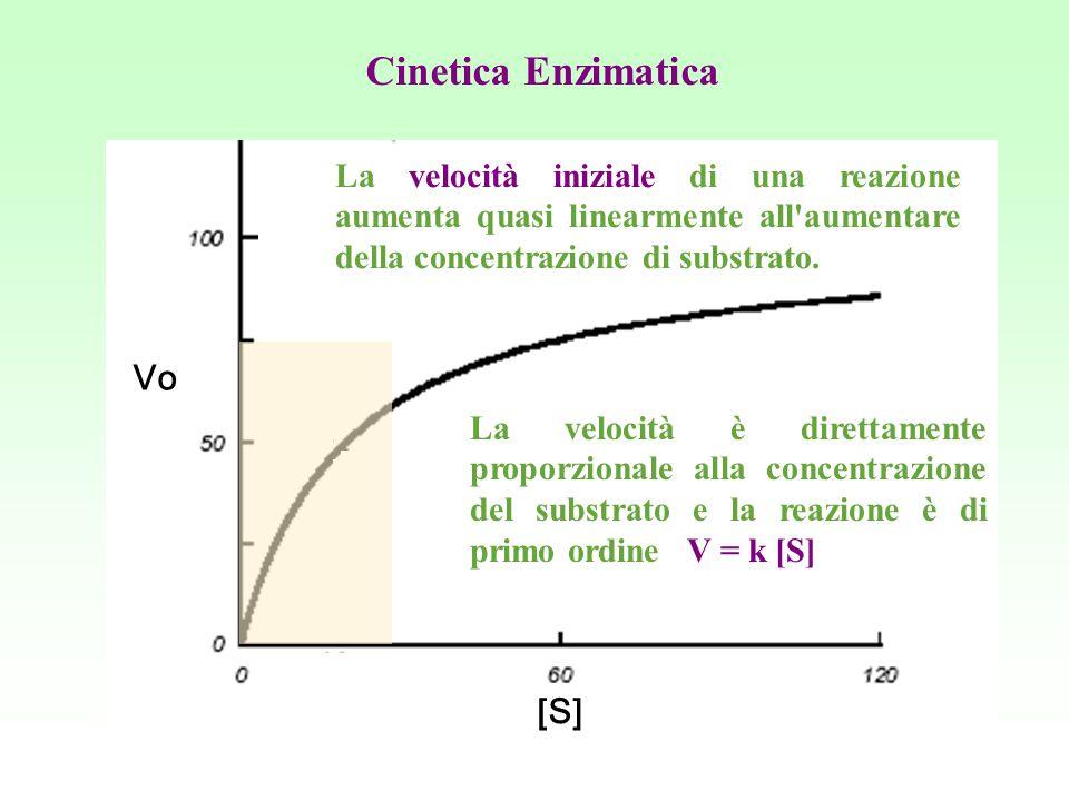 La velocità iniziale di una reazione aumenta quasi linearmente all'aumentare della concentrazione di substrato. La velocità è direttamente proporziona
