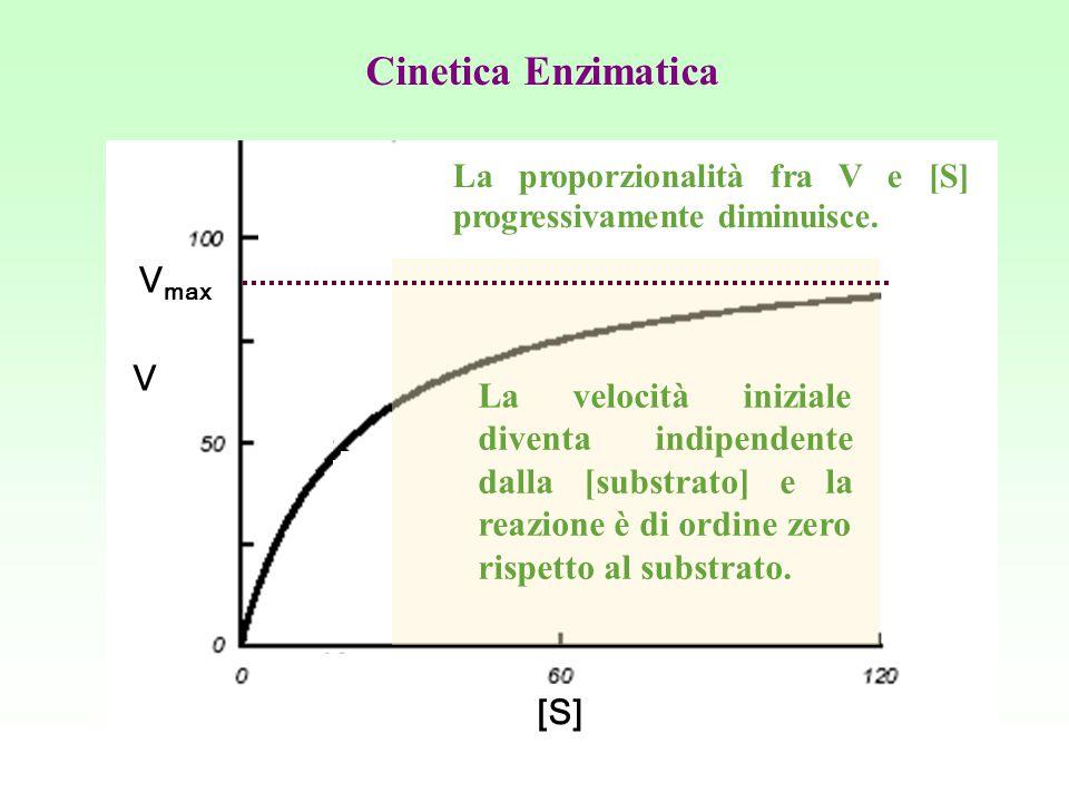 La proporzionalità fra V e [S] progressivamente diminuisce. La velocità iniziale diventa indipendente dalla [substrato] e la reazione è di ordine zero