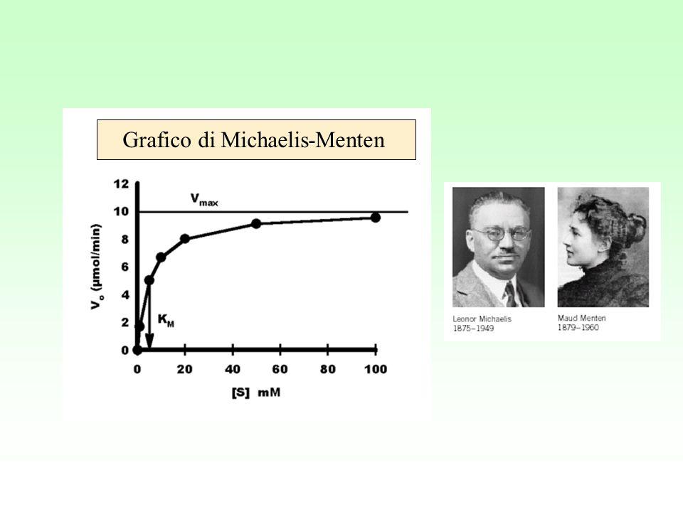 Grafico di Michaelis-Menten