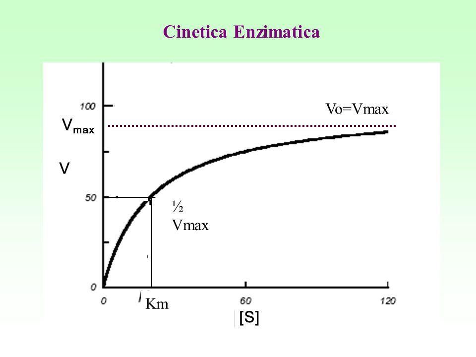 V max [S] V Cinetica Enzimatica ½ Vmax Km Vo=Vmax