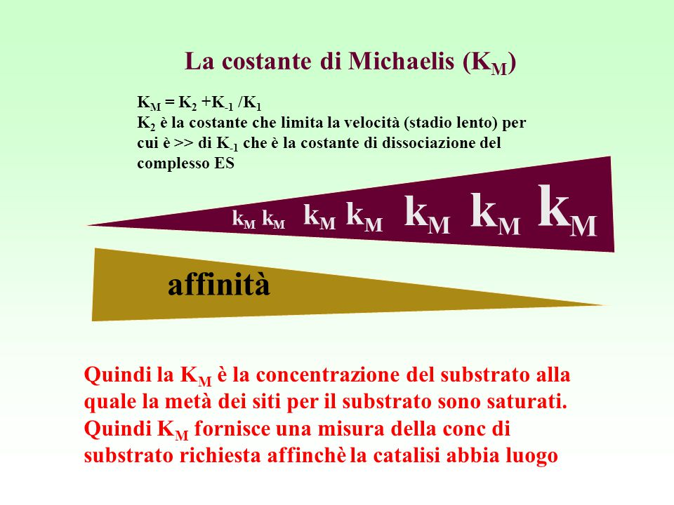 La costante di Michaelis (K M ) kMkM kMkM kMkM kMkM kMkM kMkM kMkM affinità K M = K 2 +K -1 /K 1 K 2 è la costante che limita la velocità (stadio lent