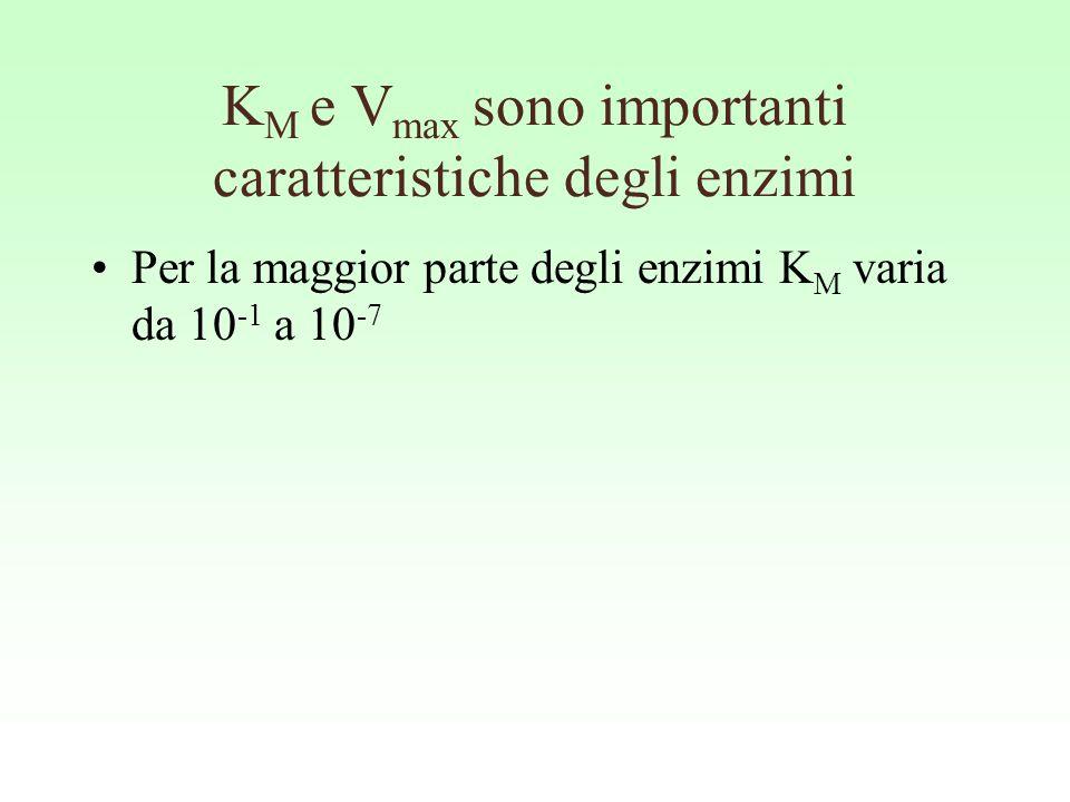 K M e V max sono importanti caratteristiche degli enzimi Per la maggior parte degli enzimi K M varia da 10 -1 a 10 -7