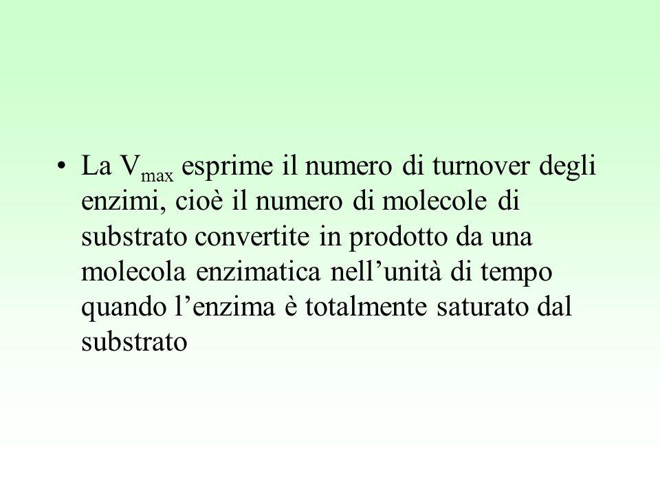 La V max esprime il numero di turnover degli enzimi, cioè il numero di molecole di substrato convertite in prodotto da una molecola enzimatica nell'un