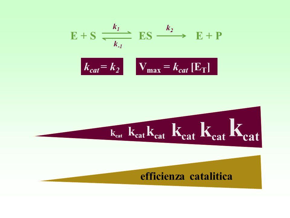 V max = k cat [E T ]k cat = k 2 k cat efficienza catalitica E + S ES E + P k1k1 k -1 k2k2