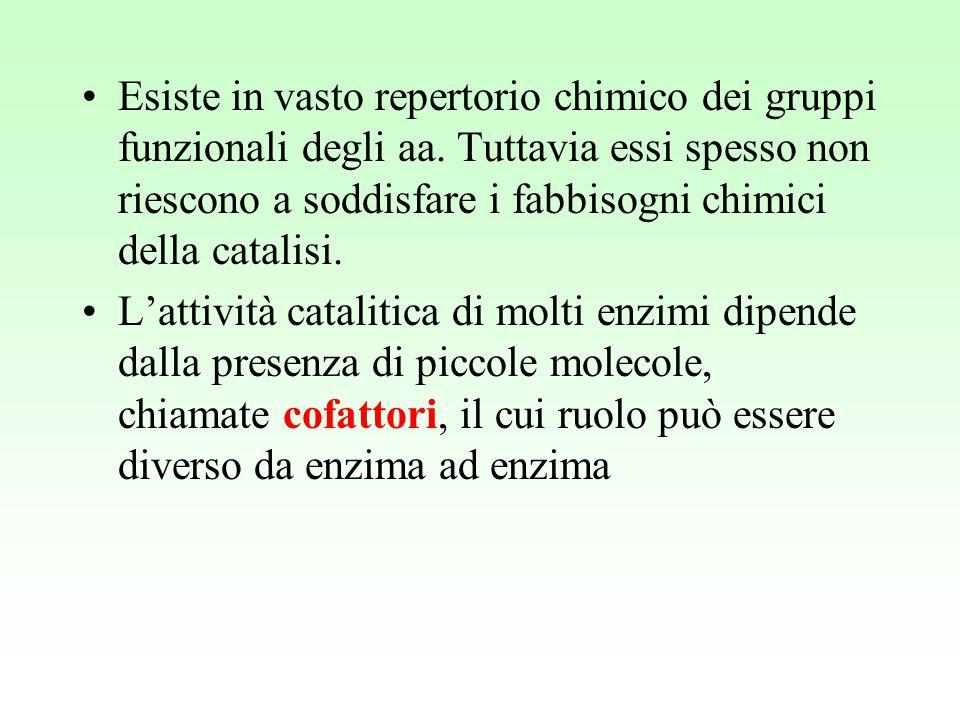 Apoenzima(denaturato con cal.) + cofattore o gruppo prostetico (stabile al riscaldamento) ⇓ Enzima completo (oleoenzima) Enzimi richiedono cofattori per funzionare che possono essere ioni inorganici (Fe, Mg, Mn, Zn, Mo etc.) o molecole organiche (coenzimi) che possono essere:  legati debolmente alla proteina  legati saldamente alla proteina (gruppo prostetico)