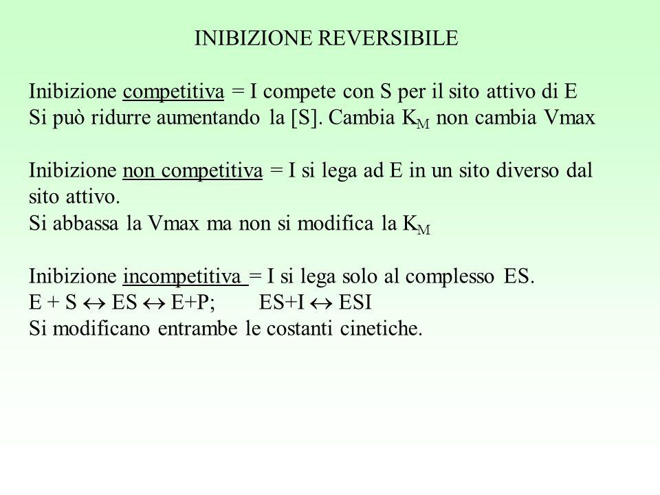 INIBIZIONE REVERSIBILE Inibizione competitiva = I compete con S per il sito attivo di E Si può ridurre aumentando la [S]. Cambia K M non cambia Vmax I