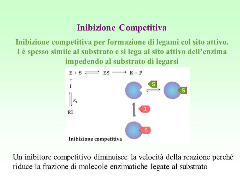 Inibizione Competitiva Inibizione competitiva per formazione di legami col sito attivo. I è spesso simile al substrato e si lega al sito attivo dell'e
