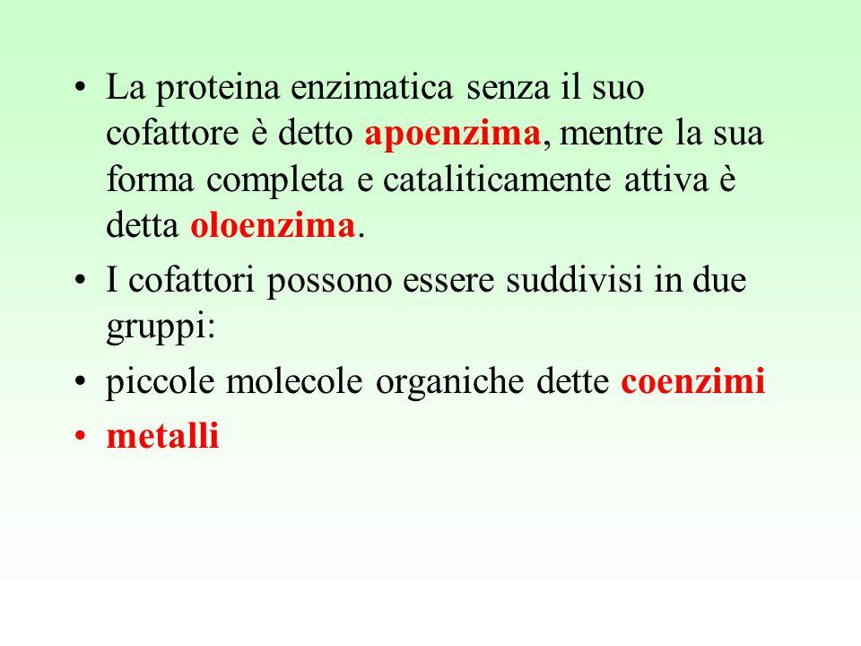 La proteina enzimatica senza il suo cofattore è detto apoenzima, mentre la sua forma completa e cataliticamente attiva è detta oloenzima. I cofattori