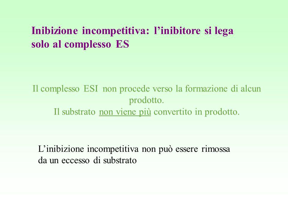Inibizione incompetitiva: l'inibitore si lega solo al complesso ES Il complesso ESI non procede verso la formazione di alcun prodotto. Il substrato no