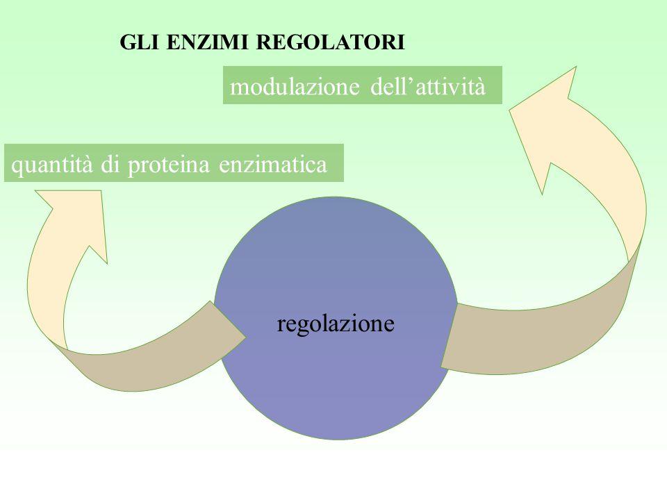 regolazione modulazione dell'attività quantità di proteina enzimatica GLI ENZIMI REGOLATORI