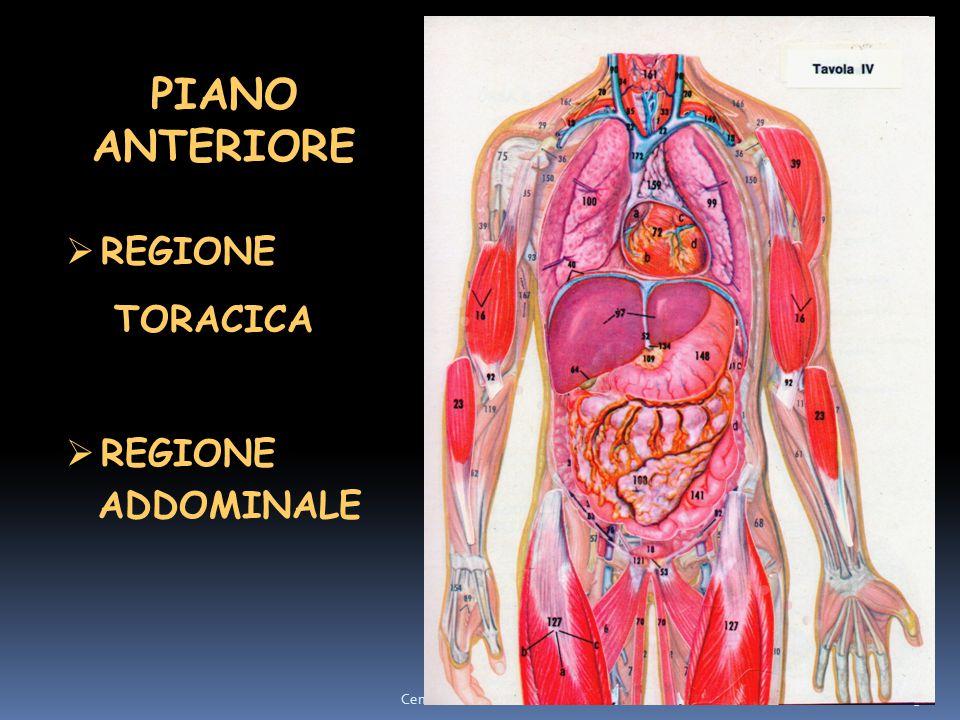 3 PIANO ANTERIORE  REGIONE TORACICA  REGIONE ADDOMINALE