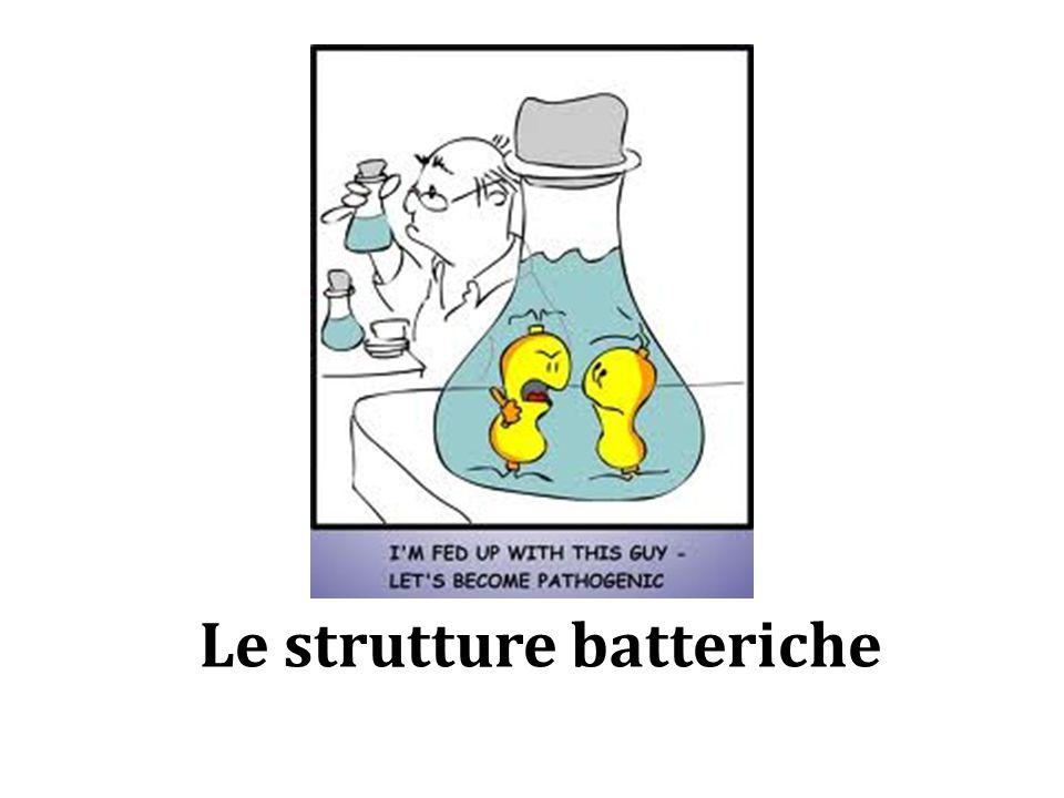 Le strutture batteriche