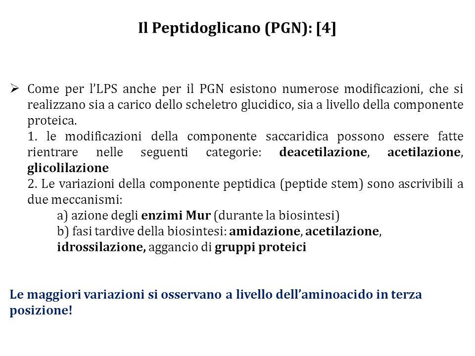 Il Peptidoglicano (PGN): [4]  Come per l'LPS anche per il PGN esistono numerose modificazioni, che si realizzano sia a carico dello scheletro glucidico, sia a livello della componente proteica.