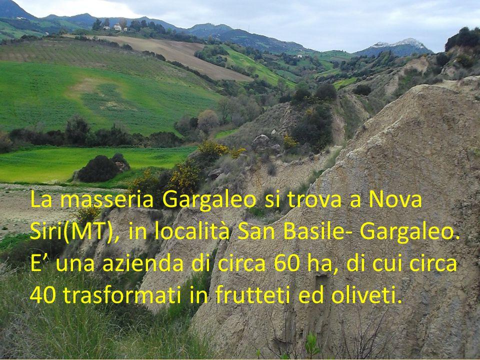 La masseria Gargaleo si trova a Nova Siri(MT), in località San Basile- Gargaleo. E' una azienda di circa 60 ha, di cui circa 40 trasformati in fruttet