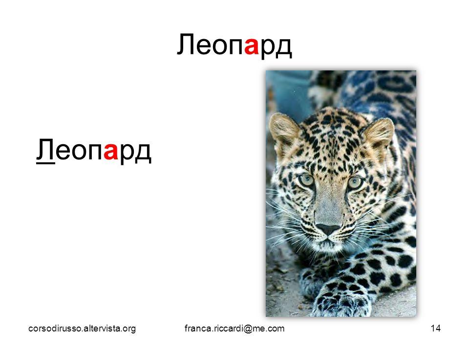 Леопард corsodirusso.altervista.orgfranca.riccardi@me.com14