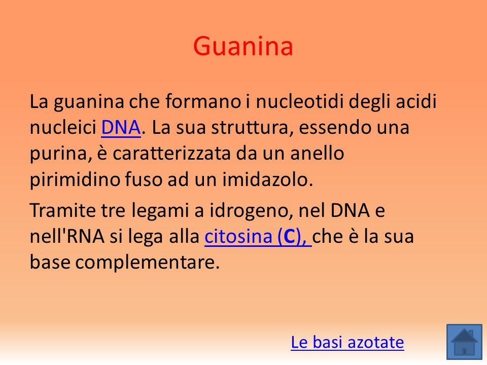 Guanina La guanina che formano i nucleotidi degli acidi nucleici DNA. La sua struttura, essendo una purina, è caratterizzata da un anello pirimidino f