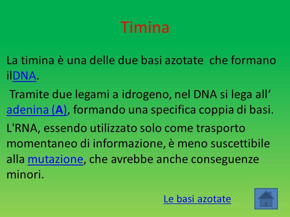 Timina La timina è una delle due basi azotate che formano ilDNA.DNA Tramite due legami a idrogeno, nel DNA si lega all' adenina (A), formando una spec