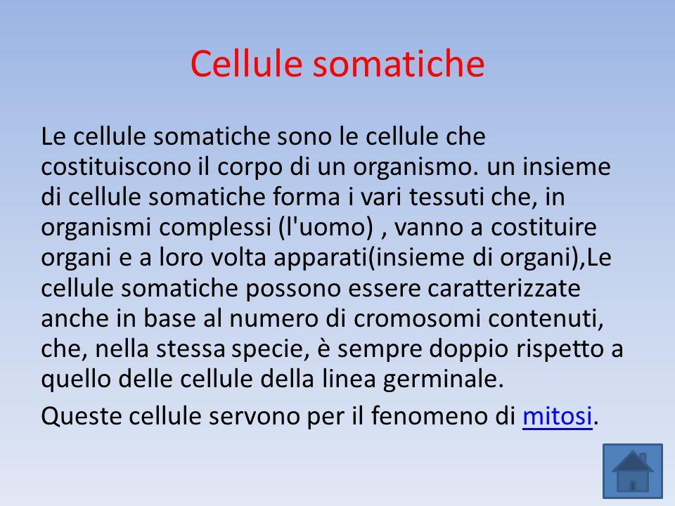 Cellule somatiche Le cellule somatiche sono le cellule che costituiscono il corpo di un organismo. un insieme di cellule somatiche forma i vari tessut