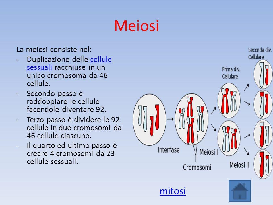 Meiosi La meiosi consiste nel: -Duplicazione delle cellule sessuali racchiuse in un unico cromosoma da 46 cellule.cellule sessuali -Secondo passo è ra