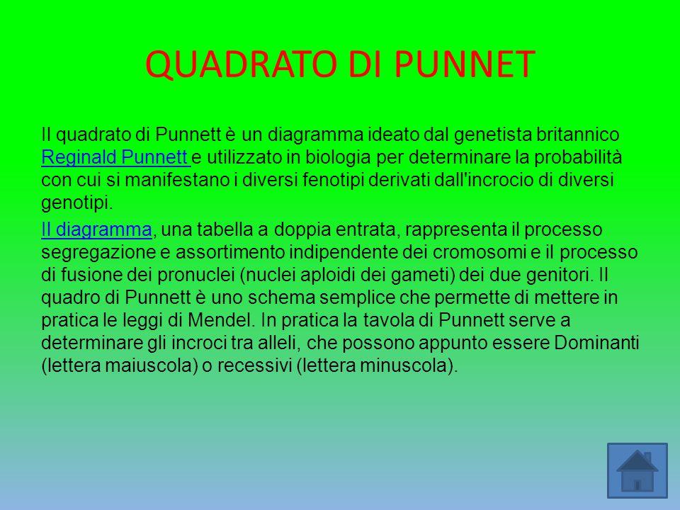 QUADRATO DI PUNNET Il quadrato di Punnett è un diagramma ideato dal genetista britannico Reginald Punnett e utilizzato in biologia per determinare la