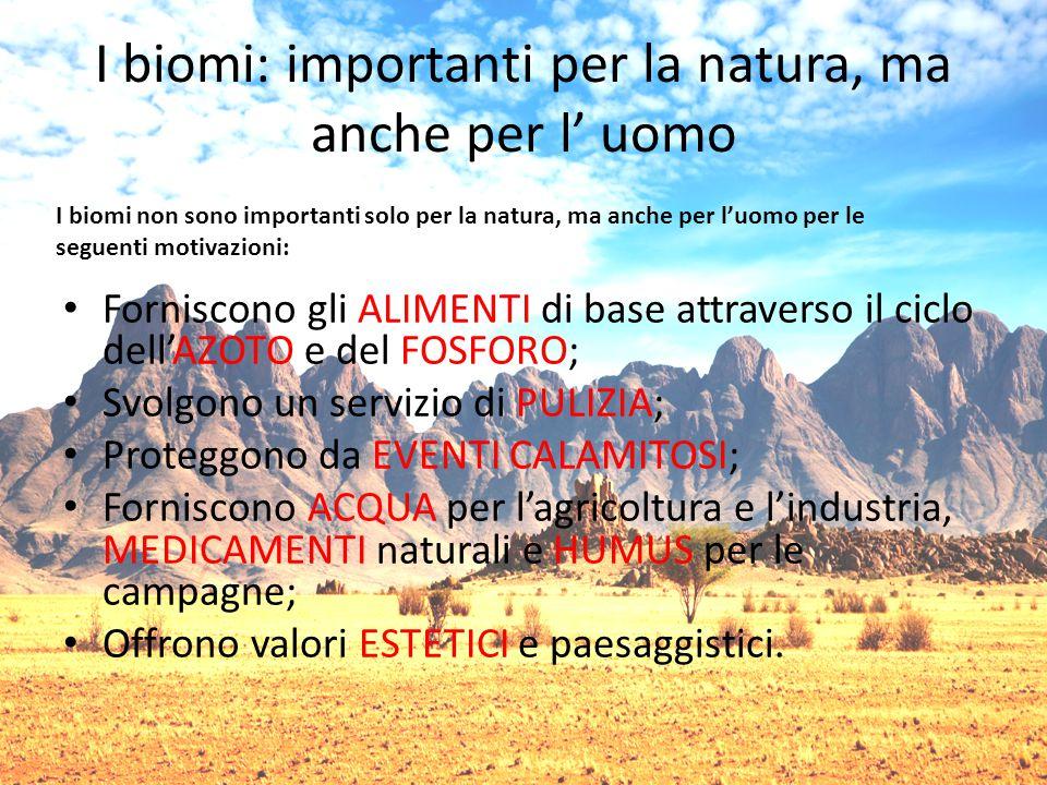 I biomi: importanti per la natura, ma anche per l' uomo Forniscono gli ALIMENTI di base attraverso il ciclo dell'AZOTO e del FOSFORO; Svolgono un servizio di PULIZIA; Proteggono da EVENTI CALAMITOSI; Forniscono ACQUA per l'agricoltura e l'industria, MEDICAMENTI naturali e HUMUS per le campagne; Offrono valori ESTETICI e paesaggistici.