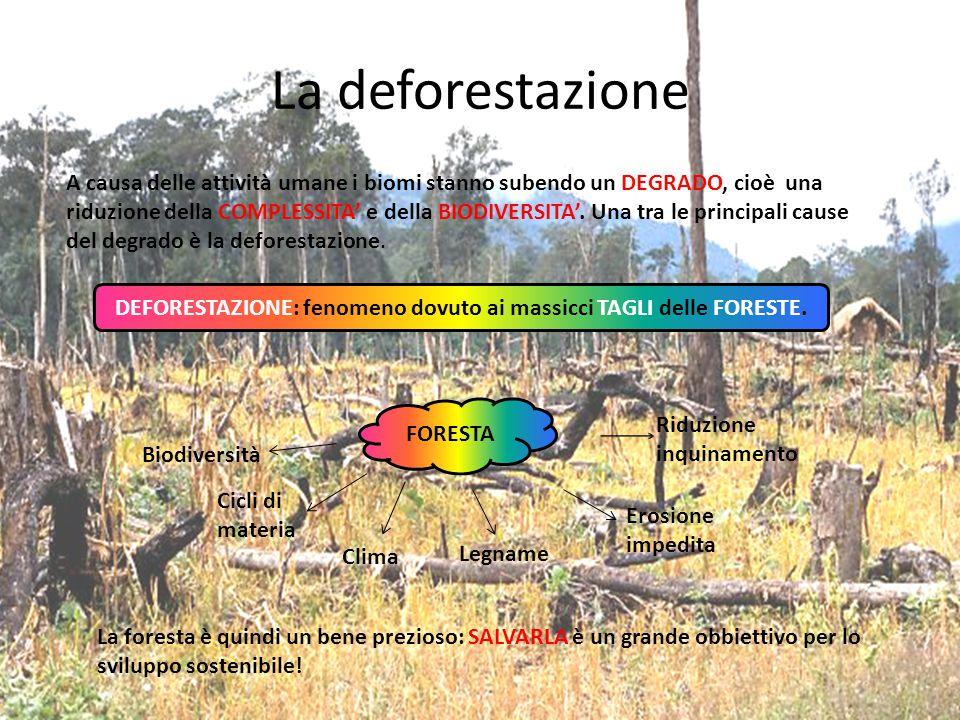 La deforestazione A causa delle attività umane i biomi stanno subendo un DEGRADO, cioè una riduzione della COMPLESSITA' e della BIODIVERSITA'. Una tra