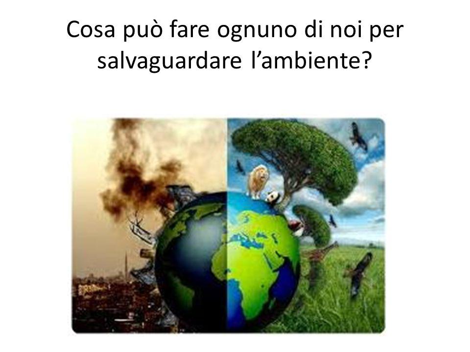 Cosa può fare ognuno di noi per salvaguardare l'ambiente?
