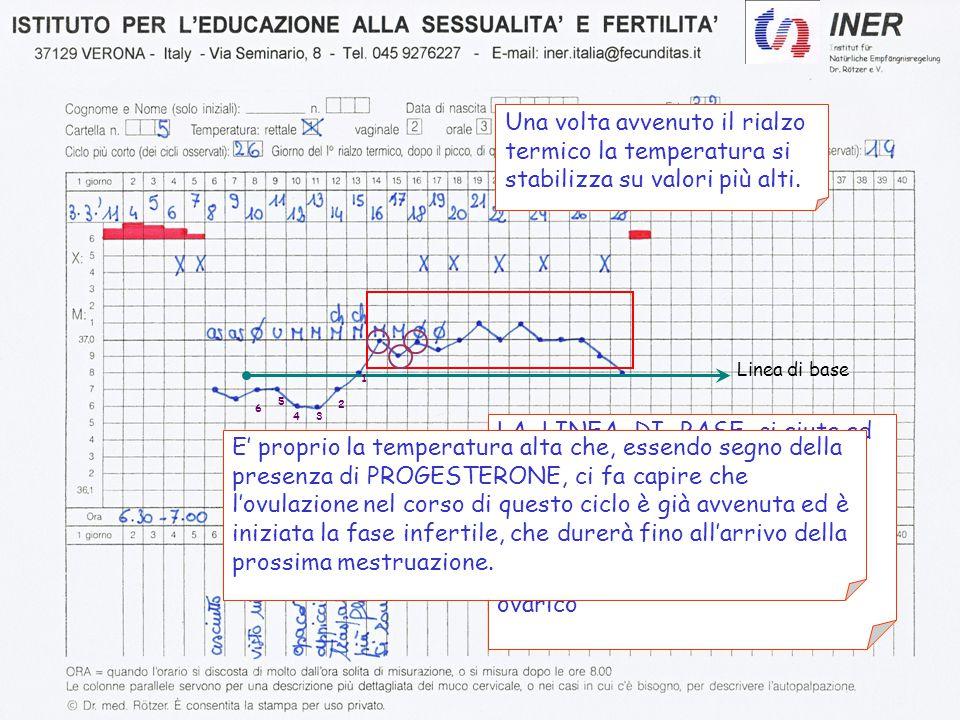 Una volta avvenuto il rialzo termico la temperatura si stabilizza su valori più alti. LA LINEA DI BASE ci aiuta ad individuare la fase di rialzo termi