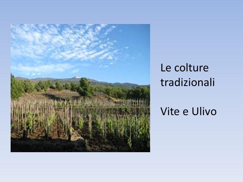 Capitolo 3 Promozione turistica della destinazione attraverso i prodotti tipici dell'enogastronomia e l'organizzazione di eventi I prodotti enogastronomici e agroalimentari tipici, possono essere così considerati a pieno titolo espressione dell'identità culturale di una comunità.