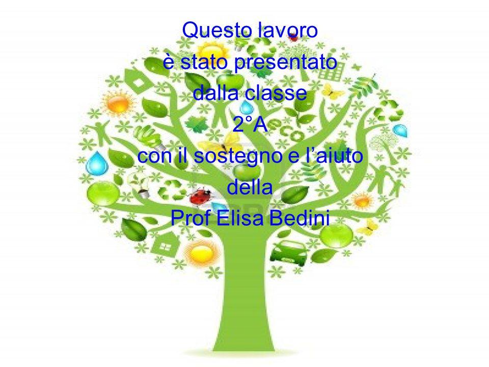 Questo lavoro è stato presentato dalla classe 2°A con il sostegno e l'aiuto della Prof Elisa Bedini