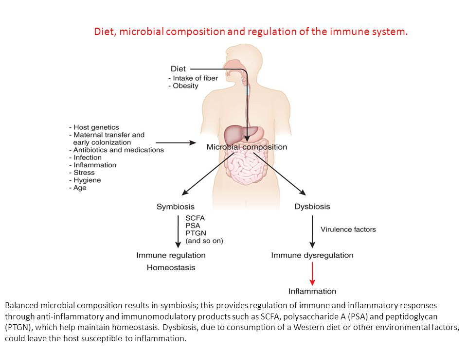 Balanced microbial composition results in symbiosis; this provides regulation of immune and inflammatory responses through anti-inflammatory and immunomodulatory products such as SCFA, polysaccharide A (PSA) and peptidoglycan (PTGN), which help maintain homeostasis.