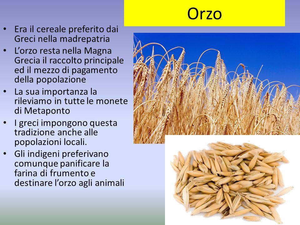 Orzo Era il cereale preferito dai Greci nella madrepatria L'orzo resta nella Magna Grecia il raccolto principale ed il mezzo di pagamento della popola