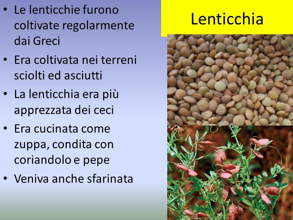 Lenticchia Le lenticchie furono coltivate regolarmente dai Greci Era coltivata nei terreni sciolti ed asciutti La lenticchia era più apprezzata dei ce