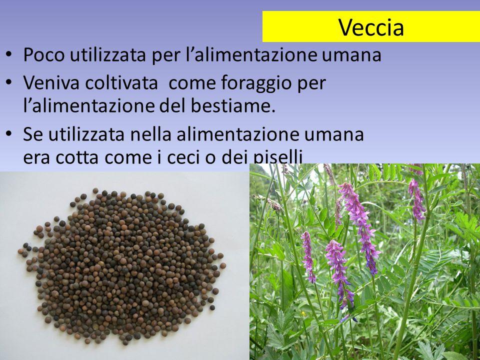 Veccia Poco utilizzata per l'alimentazione umana Veniva coltivata come foraggio per l'alimentazione del bestiame. Se utilizzata nella alimentazione um