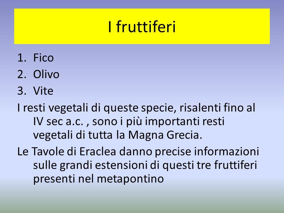 I fruttiferi 1.Fico 2.Olivo 3.Vite I resti vegetali di queste specie, risalenti fino al IV sec a.c., sono i più importanti resti vegetali di tutta la