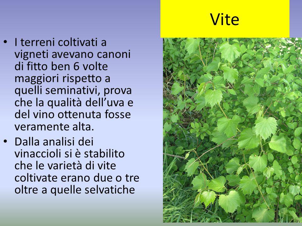 Vite I terreni coltivati a vigneti avevano canoni di fitto ben 6 volte maggiori rispetto a quelli seminativi, prova che la qualità dell'uva e del vino
